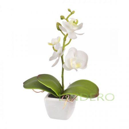 фото: Орхидея в керамическом кашпо 16 см [yw-33]